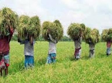 Farmer replay Tk 6277 crore loan during Covid-19 pandemic