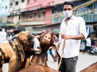 Animal sellers happy with business ahead of Eid