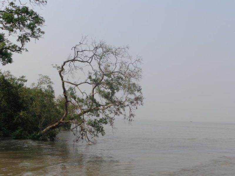 Sundarbans to open for tourists from today