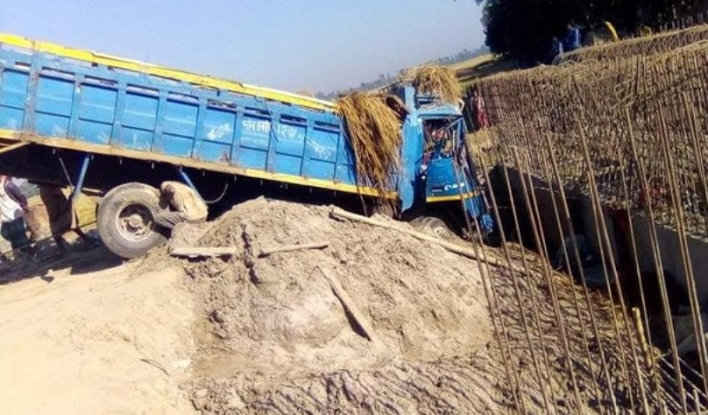 Truck loaded with cattle falls into ditch, kills guard, 13 cows