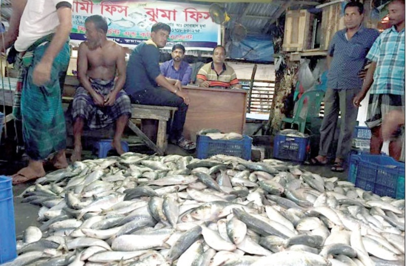 Hilsa ban: Sale, fishing stopped from midnight