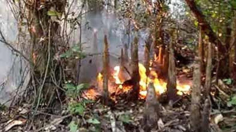 Sundarbans fire: Blaze under control after 27 hours