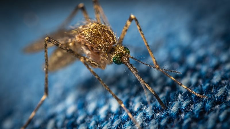 Over 1,000 people affected by dengue in July