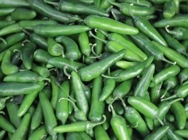 Chilli farmers facing loss despite good yield