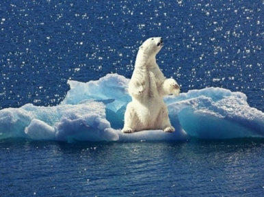 July marked the hottest month ever recorded: NOAA