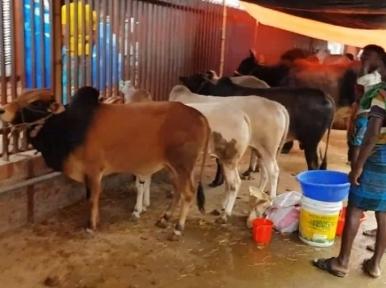 90.93 lakh animal sacrificed on Eid