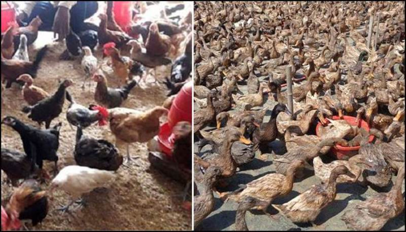 Letter to three ministries to prevent entry of poultry through the border