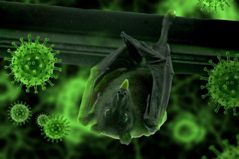 Chinese researchers claim they found new batch of coronavirus in bats